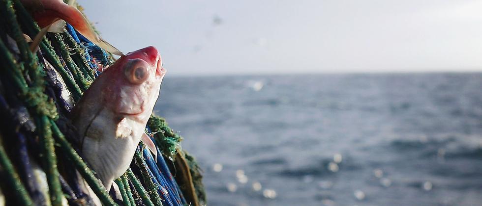 Fischerei Umwelt Meeresforschung EU-Recht Überfischung Ozeane