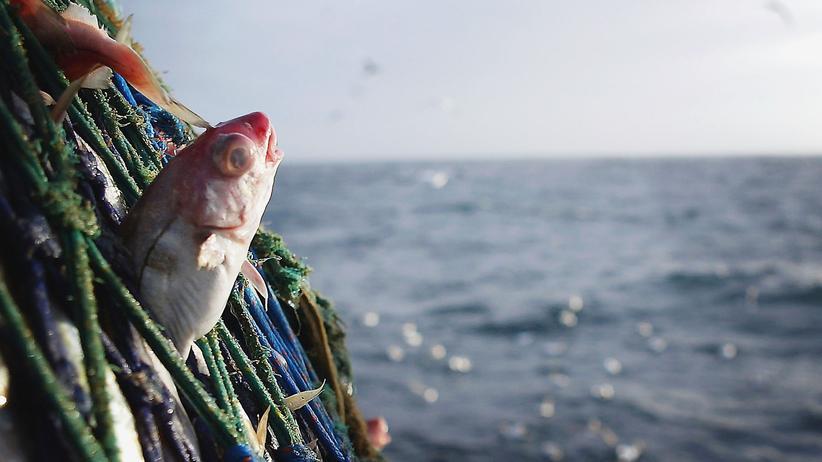"""Neue Studie zur Fischerei: """"Die Fangquoten sind illegal und umweltschädlich"""""""