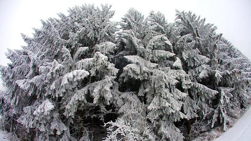 Waldzustandsbericht: Jeder vierte deutsche Baum hat Schäden
