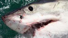 Haie Haifisch Artenschutzkonferenz Doha Qatar Cites