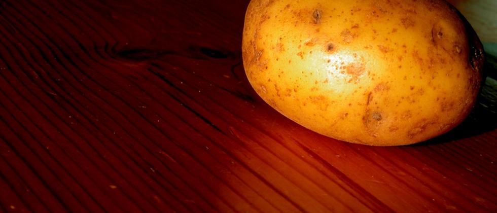 Kartoffel Amflora Gentechnik Ernährung