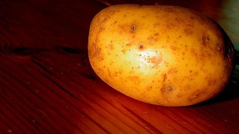 Fragen und Antworten zu Amflora: Das Geheimnis der genetisch veränderten Kartoffel