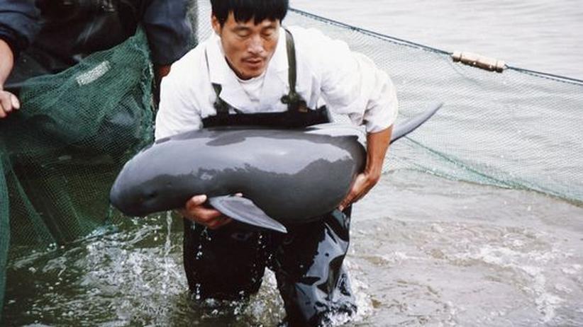Tagung in Stralsund: Walforscher fordern besseren Schutz für die Riesen der Meere