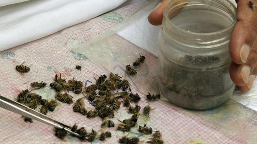 Nutztiere: Imker beklagen massives Bienensterben