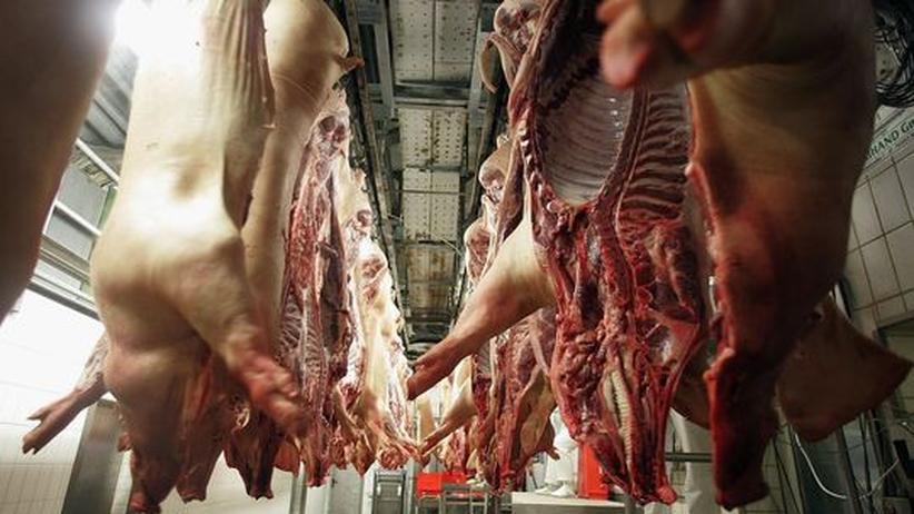 Tierschutz Massentierhaltung Tierversuche
