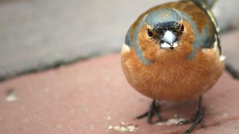 Ornithologie: Vögel verschmähen Bio-Kost