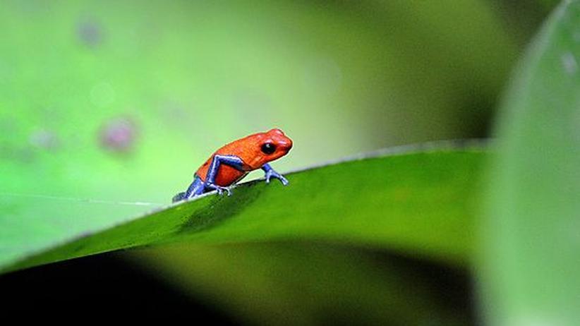 UN-Bericht: Artensterben wie seit den Dinosauriern nicht mehr