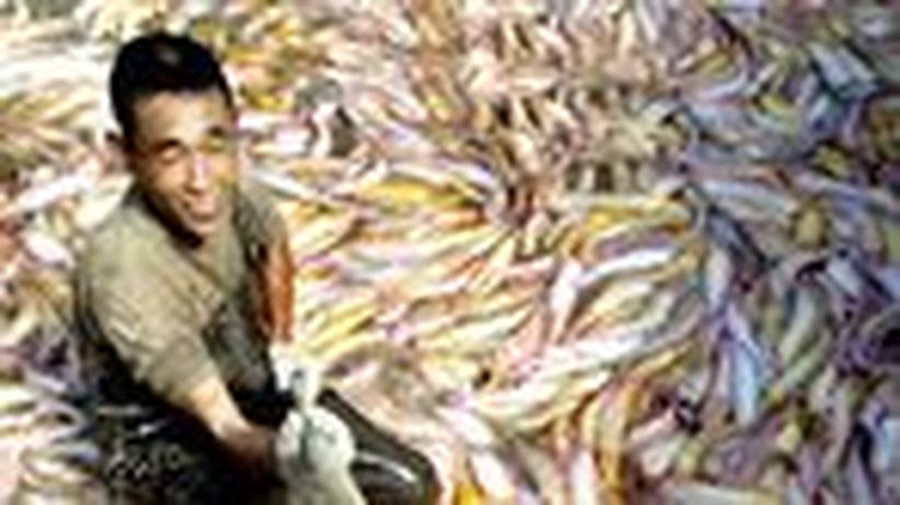 Aquafarming: Auf der Suche nach der perfekten Fischfarm