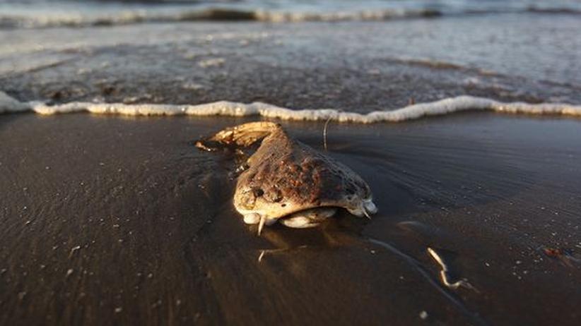 Ölkatastrophe Umweltverschmutzung Golf von Mexiko Ölpest