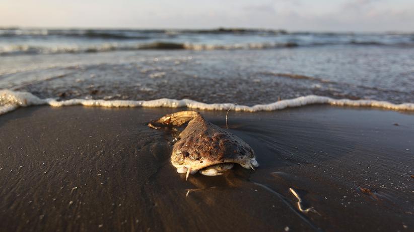 Golf von Mexiko: Die Ölpest ist zu groß für den Menschen