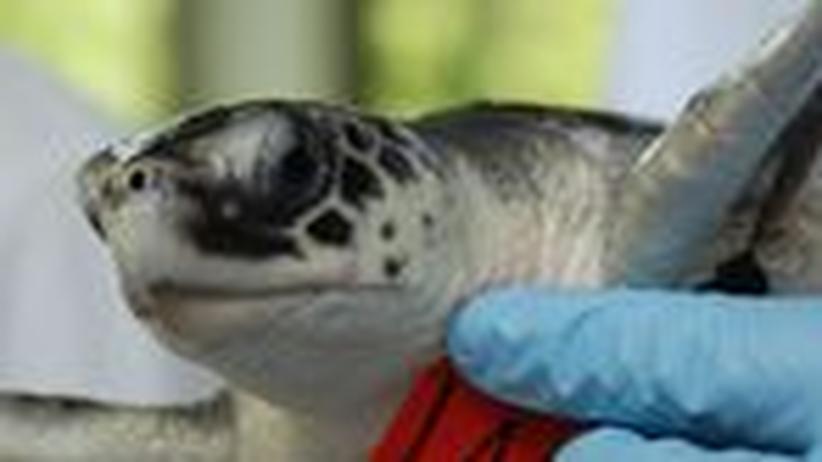 """Ölpest vor der US-Küste: """"Die Kadaver sind Beweismittel gegen BP"""""""