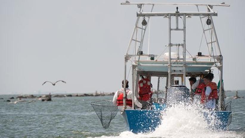Kampf gegen Ölpest: Forscher erheben schwere Vorwürfe gegen BP