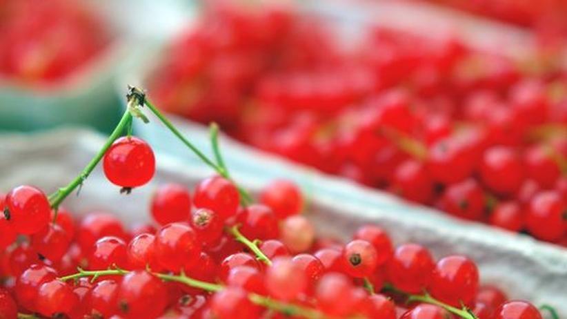 Belastete Lebensmittel: Verbotene Pestizide in Johannisbeeren entdeckt