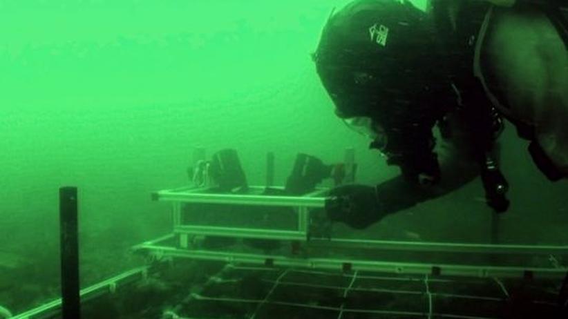Taucher AWI Helgoland Meer Experiment Meeresforschung