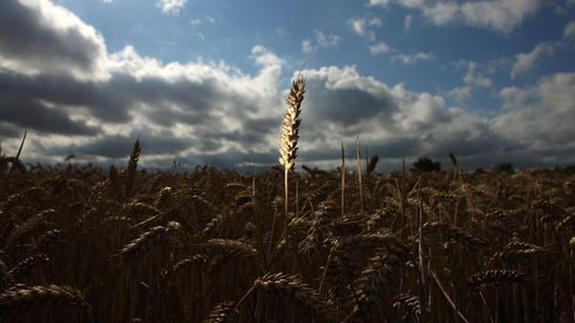 Landwirtschaft Feld Nahrung Welthunger