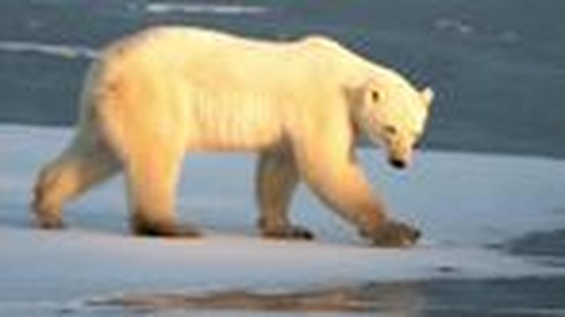 """Eisschmelze: """"Das Eis am Nordpol ist morsch"""""""