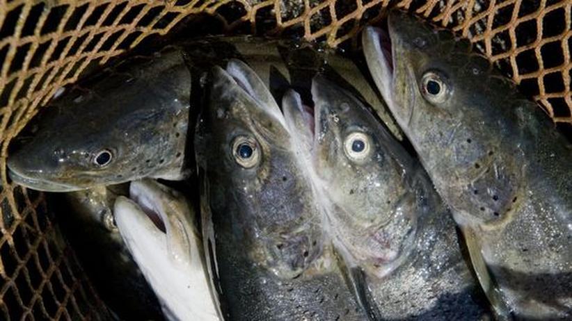 Fischerei und Artenschutz: Fragwürdiges Ökosiegel