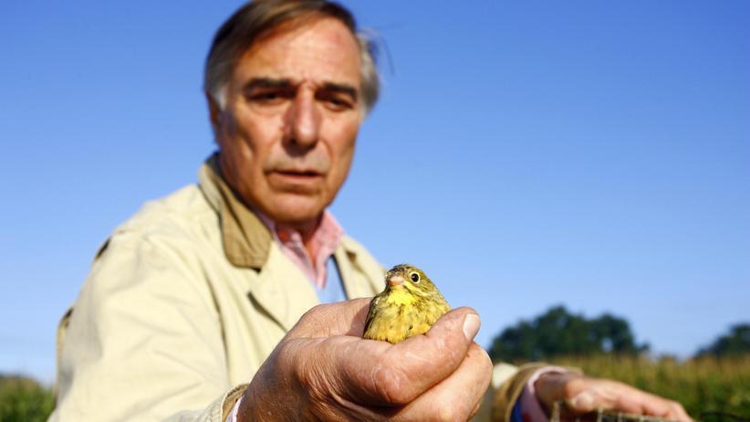 Jagd auf Ortolane: Der Staat wildert mit