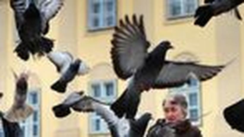 Stimmt's?: Fest im Vogelblick