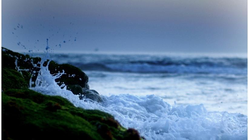 Wellenkraftwerk: Strom von der schottischen Auster