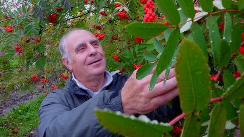 Genbank für Pflanzen: Das Beerenkomplott