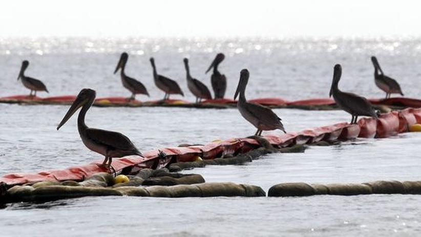 Ölpest Golf von Mexiko: BP erkauft sich Klageverzicht