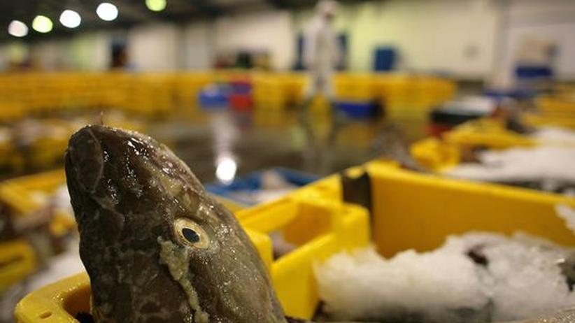 Überfischung: Die Fischgründe sind weltweit ausgereizt