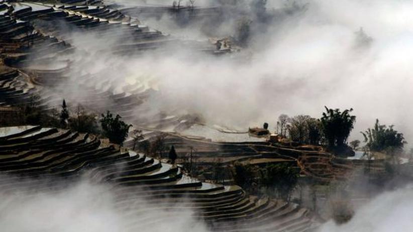 Reisfeld China Grüne Gentechnik Landwirtschaft
