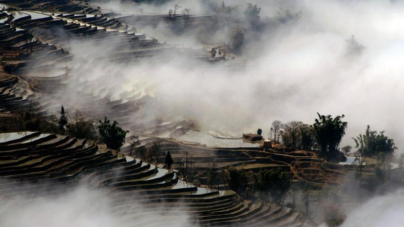 Grüne Gentechnik: Chinesen gegen genveränderten Reis