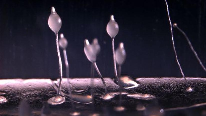 Mikrobiologie: Selbst Amöben betreiben Ackerbau
