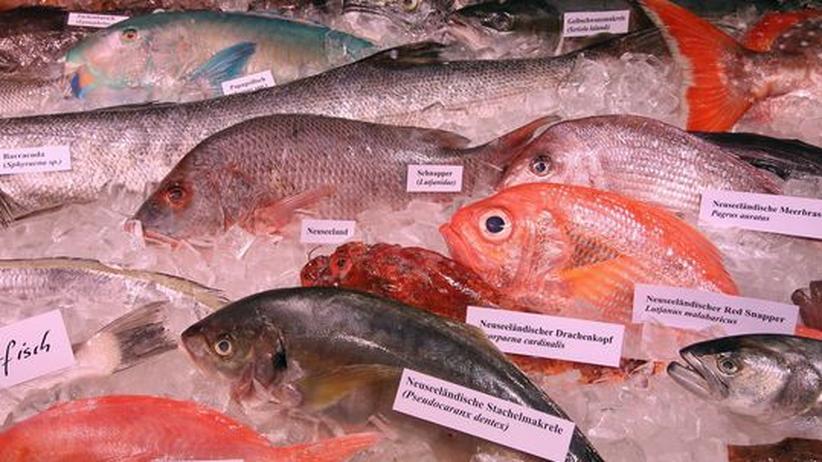 Überfischung der Meere: Weltfischereibericht gibt Anlass zur Sorge