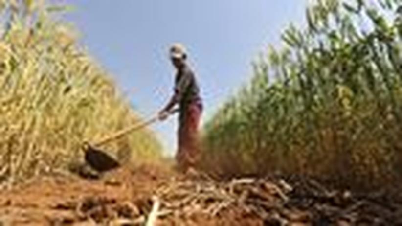 Nachhaltigkeitsbericht: Die Menschheit im Wettlauf um Ressourcen