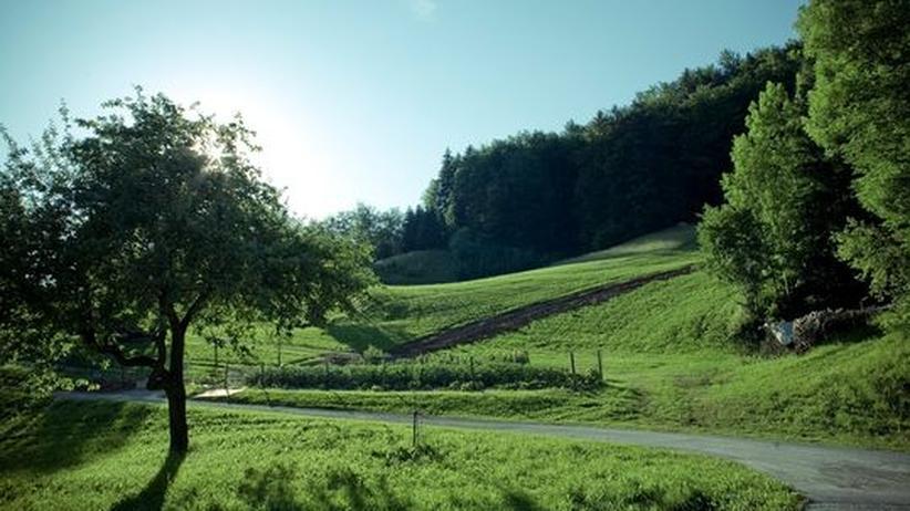 Gartenprojekte: Endlich raus ins Grüne