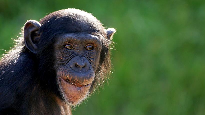 Zoologie: Gesichtserkennung für Affen