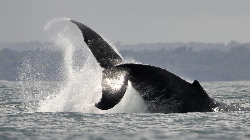 Physik und Meeresbiologie: Lauschangriff unter Wasser