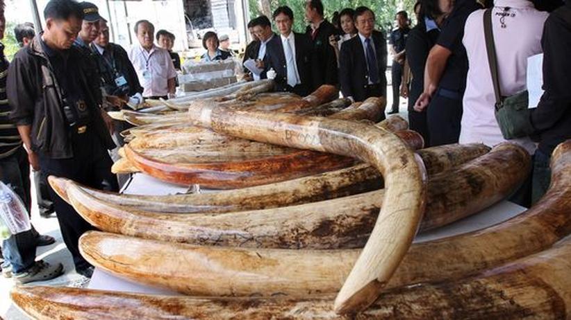 Jagd auf Elefanten: Elfenbein-Schmuggel bleibt ein lukratives Geschäft
