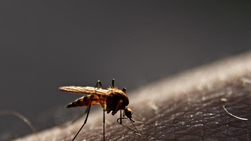 Insektenplage Bitte Jetzt Die Mucken Fangen Zeit Online