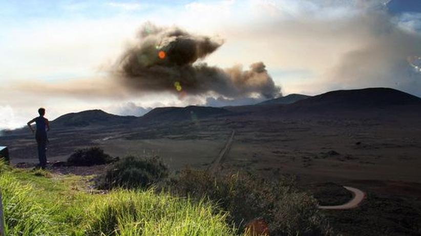 Entwicklungsbiologie und Evolution: Käferjagd auf der Vulkaninsel
