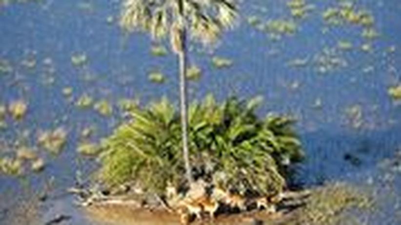 Okawango Botswana Afrika