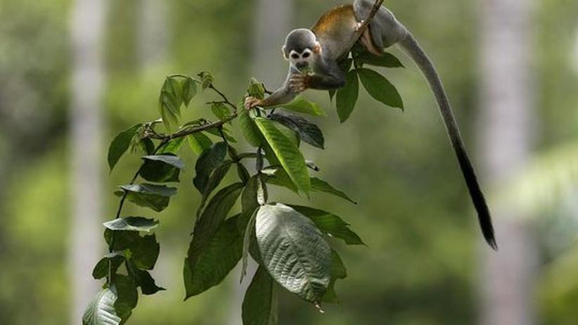 Klimaschutz: Neue Bäume bringen wenig fürs Klima