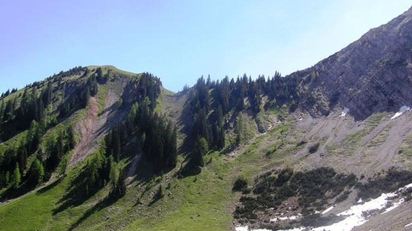 Alpen Pflanzenproben Sediment