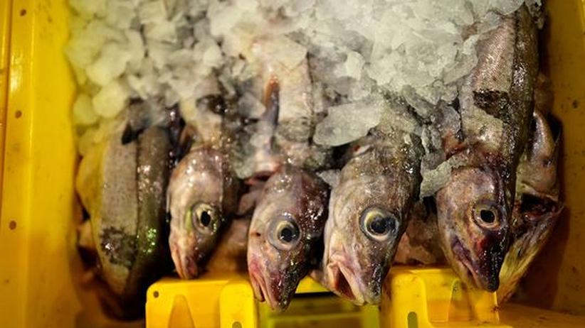 Fangquoten: Gefangene Fische in einer Eisbox.