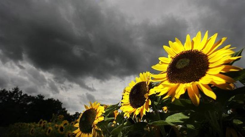 Jahresbericht: Deutscher Wetterdienst fordert strengeren Klimaschutz