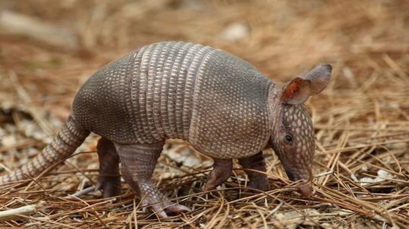 Das unterschätzte Tier: Gnaaag oder doch Gnirrrk?