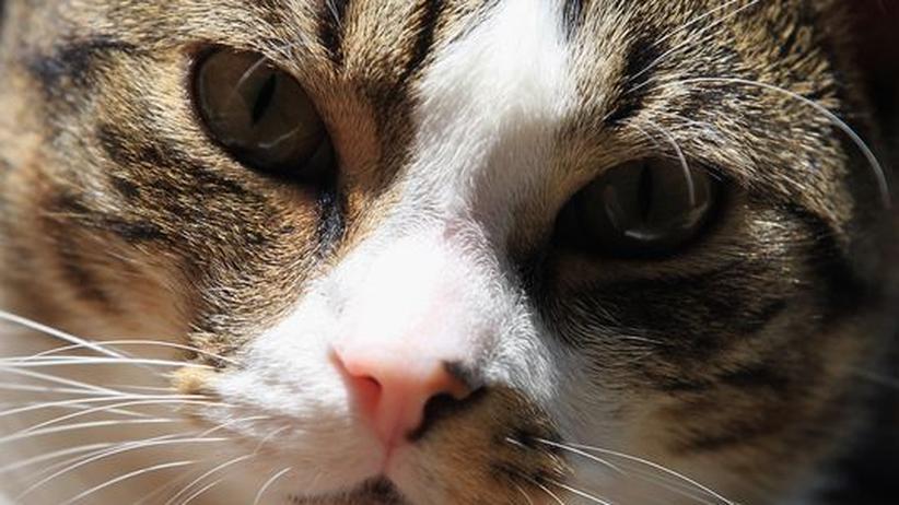 Das unterschätzte Tier: Am Touchscreen sind alle Katzen schlau