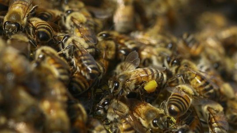 Massensterben: Die Biene und das Biest