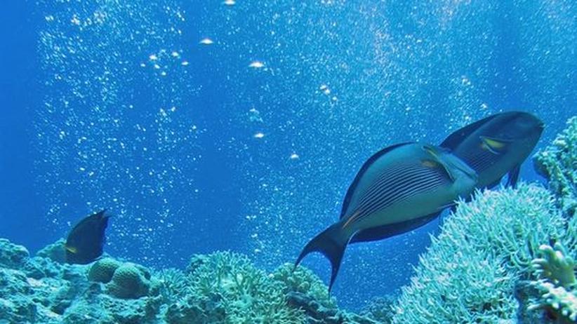 Meeresforschung: Ein Korallenriff mit Luftblasen
