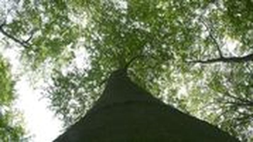 Sind Sie auch ein Waldmensch? Testen Sie ihr Wissen über die Ökologie des Waldes.