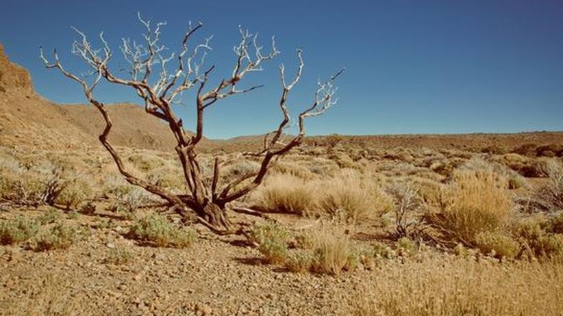 Klimawandel: Der Dürre ausgeliefert