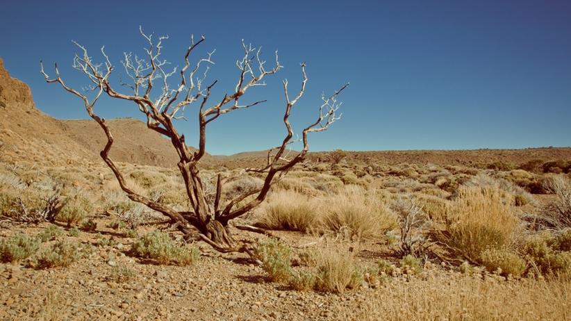 Klimawandel: Die Sahelzone ist der Dürre ausgeliefert
